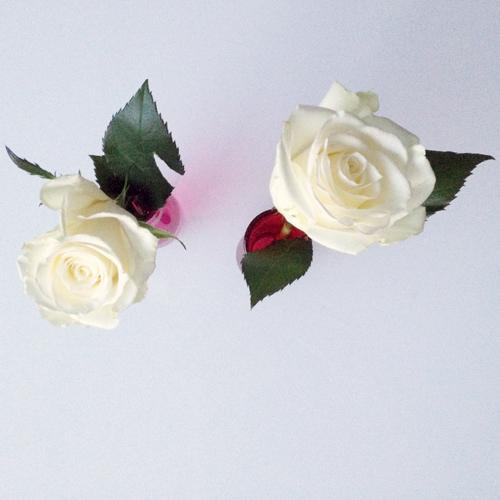 Valentine's-roses