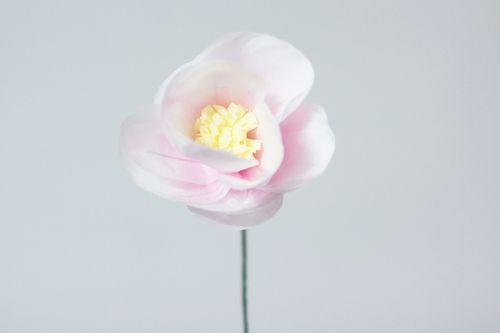Paper-Begonia-pink
