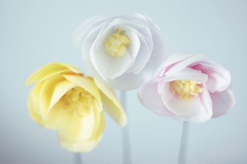 Paper-Begonia-trio1
