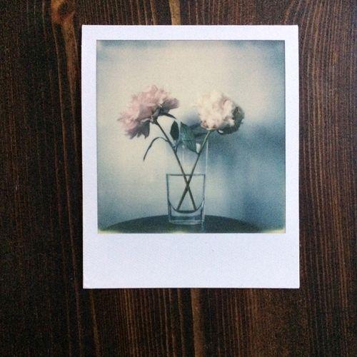 Polaroid-Peonies-2