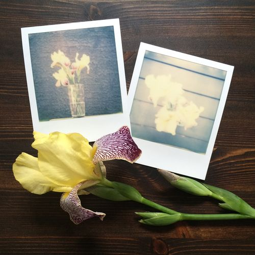 Polaroid-Irises-2