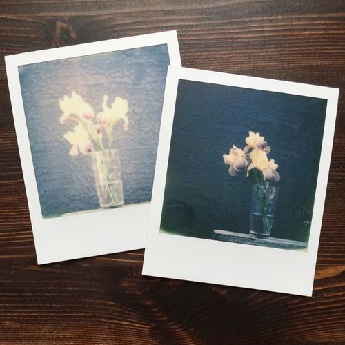 Polaroid-Irises-3