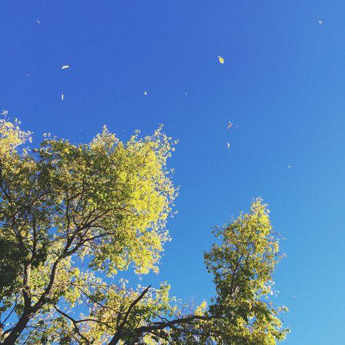 Falling_Leaves